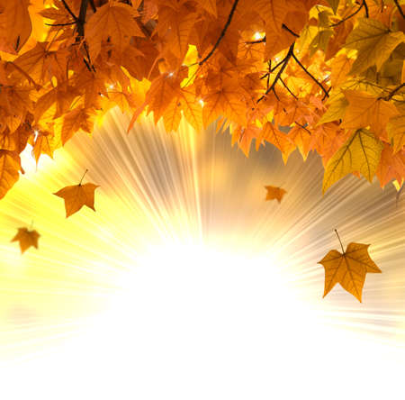 autumnal: Falling orange leaves background against sun ray