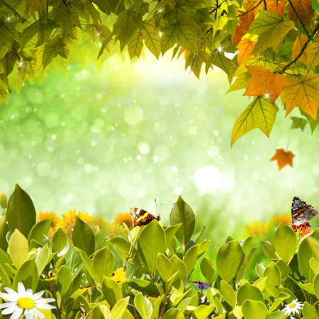 Nature background with green foliage, sunflower and rainbow photo