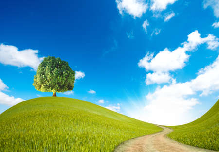 A way in the green landscape