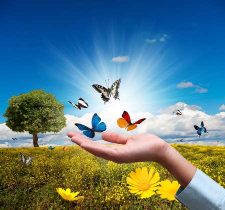 Proteger el concepto de medio ambiente con flores y mariposas