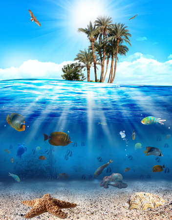 Underwater scene with fishes and seashell photo