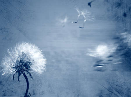 Dandelion background in grunge style Stock Photo - 10934300