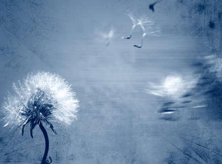 Dandelion background in grunge style photo