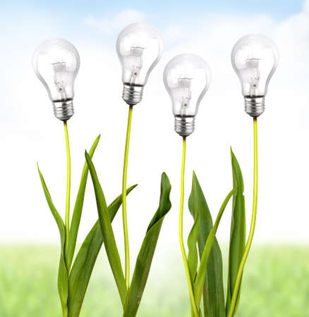 energy supply: Green plant with bulb light Stock Photo