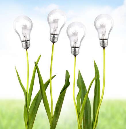 eficiencia energetica: Planta verde con la bombilla