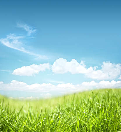 afield: beautiful grassland landscape on a sky background
