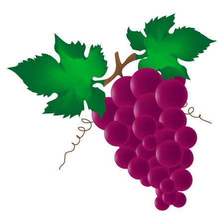 red wine grape isolated on white background photo