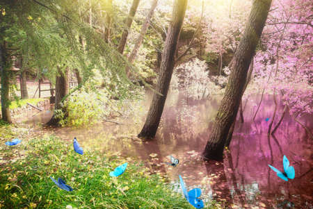 Magic forest with butterfly at sunrise photo