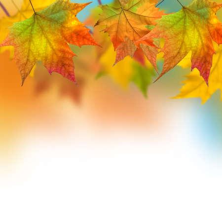 Vivid autumn leaves of a tree Stock Photo - 12007435