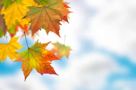 Vivid autumn leaves of a tree Stock Photo - 12032948