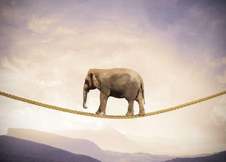 Konzept der Schwierigkeiten im Geschäft mit Elefanten auf einem Seil Standard-Bild