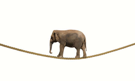 heavy risk: Concept of difficulty in business with elephant on a rope Stock Photo