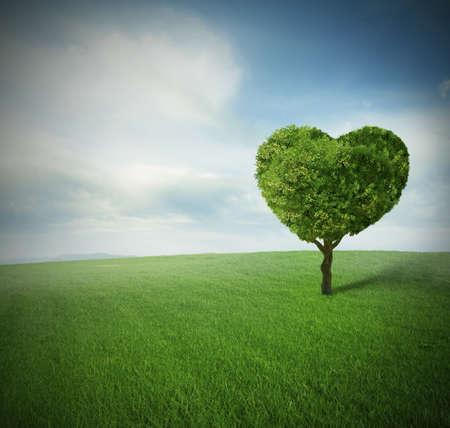 champ vert: arbre de coeur dans un champ vert paceful