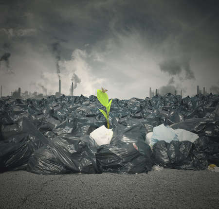 Concept of pollution and new green life photo