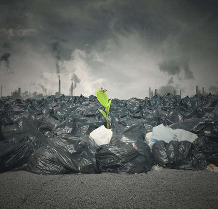reciclar basura: Concepto de la contaminación y la nueva vida verde