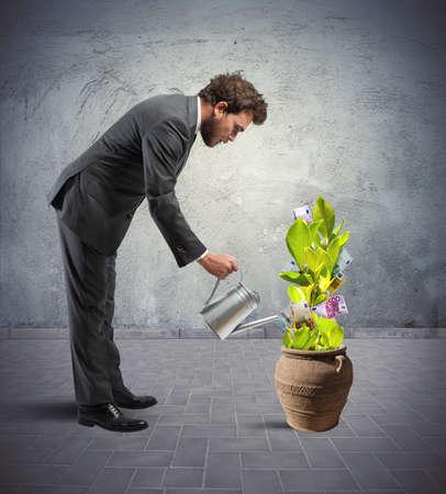earn: Concepto de f�cil ganar con la planta de dinero Foto de archivo