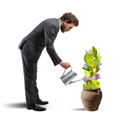 regando plantas: Concepto de f�cil ganar con la planta de dinero Foto de archivo