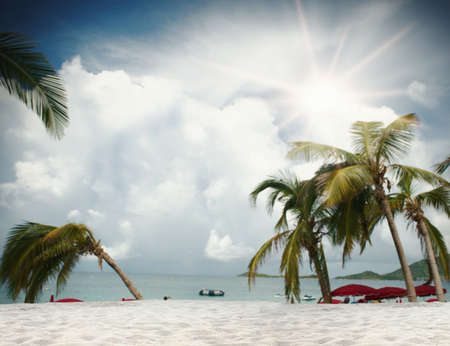 scenary: Background of tropical beach with palm trees