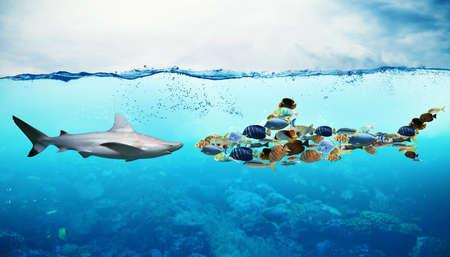 水中の魚のセットに対してサメ