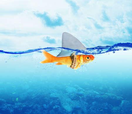 Fische verkleidet als Haifisch im Meer