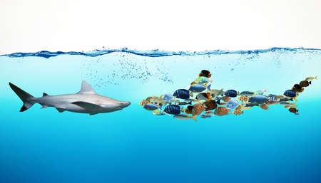 joining forces: Shark against a set of fish underwater Stock Photo