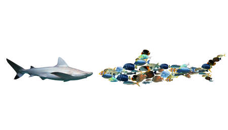 Shark against a set of colourful fish