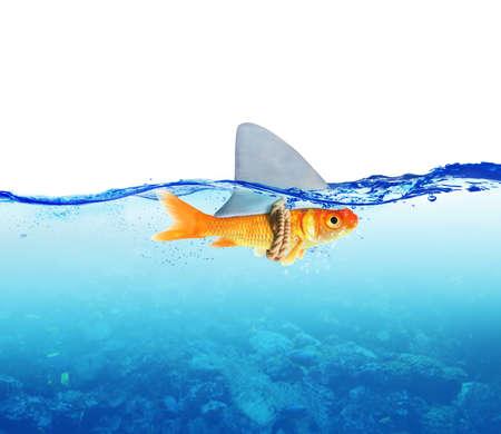 바다 상어처럼 위장한 물고기