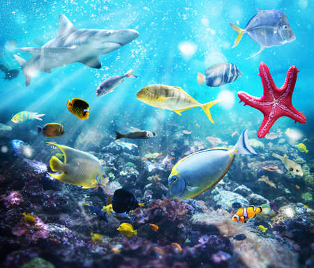 deep water: Colourful fish and marine vegetation undersea with sunray Stock Photo