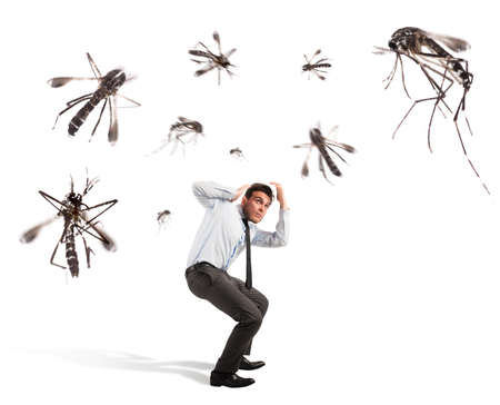giant man: Giant mosquitoes attacking a frightened scared man