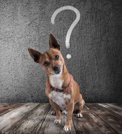 Hond met vragende expressie Stockfoto