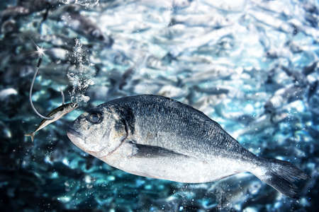 Fish takes the bait to lure
