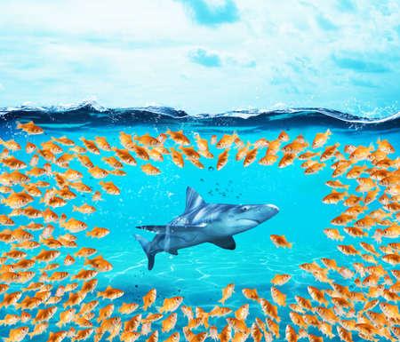 Goldfishes 그룹 상어를 둘러싸고 있습니다. 화합의 개념은 힘, 팀웍 및 파트너십입니다. 스톡 콘텐츠