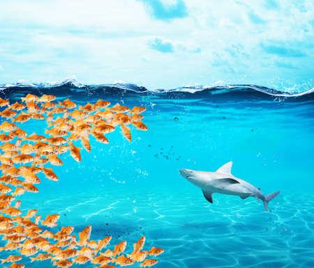 De goudvissengroep maakt een grote mond om de haai te eten. Concept van eenheid is kracht, teamwerk en partnerschap Stockfoto