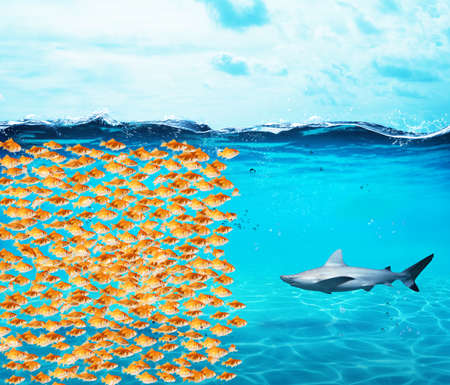 Goldfishes group make a wall against the shark. Concept of unity is strenght, teamwork and partnership