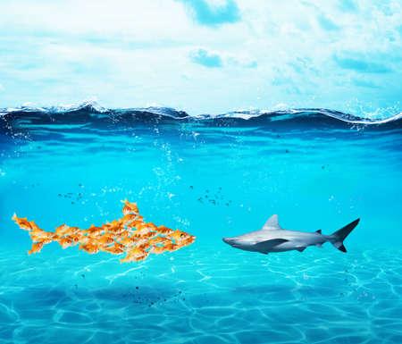 大きなサメは金魚に成っています。単一性の概念は強さ、チームワークとパートナーシップ 写真素材
