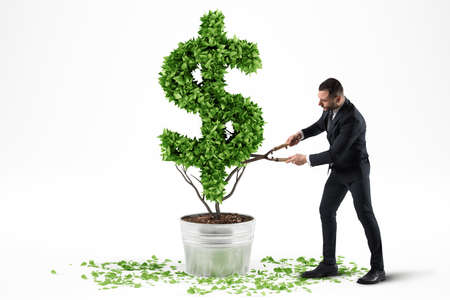 Potted plant with dollar shape. 3D Rendering Stock Photo