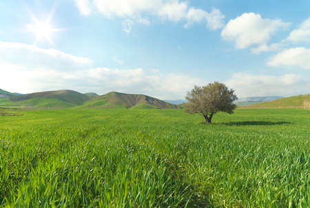 Tree alone in a sunny green field Stock Photo