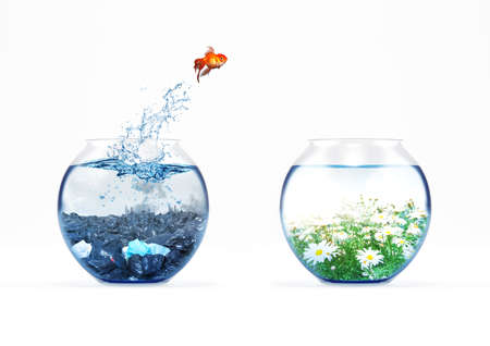 Improvement and moving concept with a goldfish jumping from a dirty aquarium to a clean one Stock Photo - 116930262