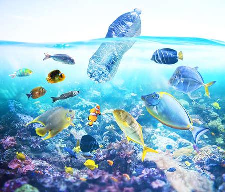 Fische beobachten eine schwimmende Flasche. Problem der Plastikverschmutzung unter dem Meereskonzept.