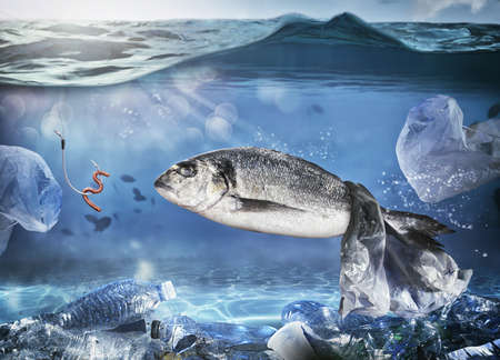 Gevangen vis door een drijvende zak. Probleem van plasticvervuiling onder het zeeconcept