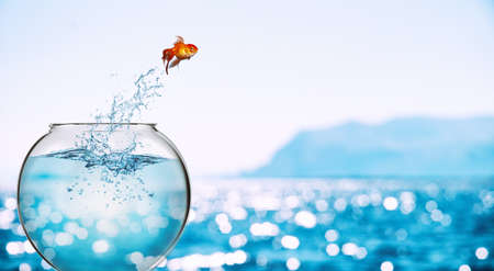 Goldfish leaps out of the aquarium to throw itself into the sea Stock Photo