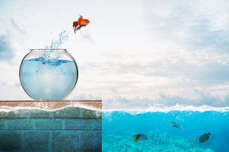 Goldfish salta del acuario para arrojarse al mar