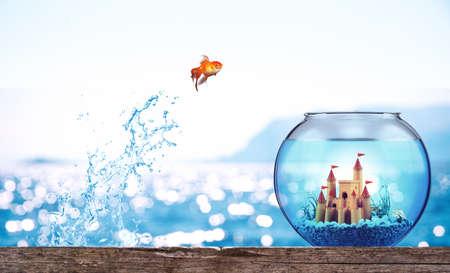 Le poisson rouge saute de la mer pour se rendre dans un luxueux aquarium Banque d'images