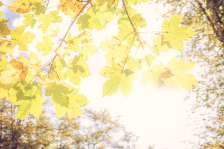 Bright background of colored leaves in autumn. Green, yellow and orange color