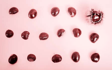 Stylish composition of chestnut on pink background