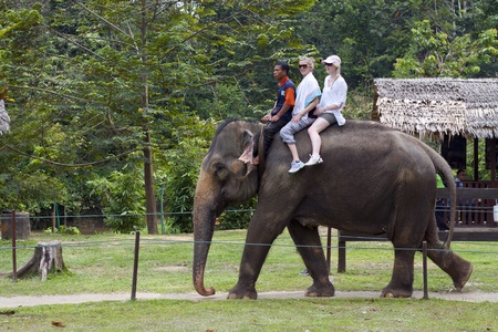 KUALA GANDAH, MALAYSIA - SEPTEMBER 24: Staff of Kuala Gandah Elephant Conservation Centre riding an elephant with two European tourists on SEP 24, 2011 in Kuala Gandah, Malaysia. Elephant rides is a main attraction for tourists to this center Editorial