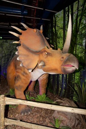 KUALA LUMPUR, MALAYSIA-MAY 12: A life size Styracosaurus, a ceratopsian dinosaur on displayed at the Dinosaurs Live! exhibition at the National Science Centre on May 12, 2012 in Kuala Lumpur, Malaysia. The exhibition will last until July 31, 2012.