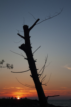 Dead tree silhouette at sunset against clear sky Stock Photo