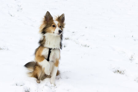 paw smart: Cute dog portrait in snow