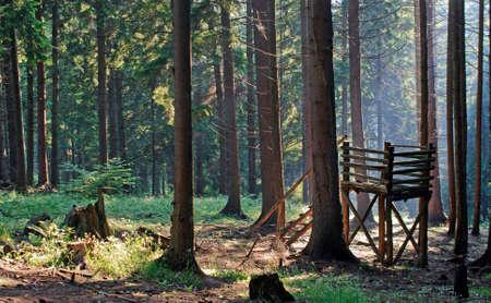 Morning in the forest Standard-Bild